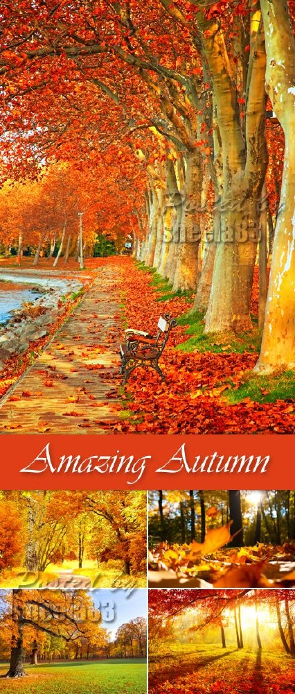 Stock Photo - Amazing Autumn