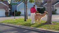 Соседи - 1 сезон / The Neighbors (2012) WEB-DLRip