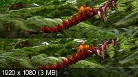 Джунгли 3D - Магия другого мира в 3Д / Der Dschungel 3D - Zauber einer anderen Welt 3D (2012) BDRip 1080p 3D / 7.14GB