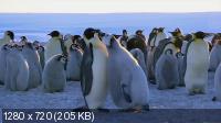 Пингвин: Шпион под прикрытием / Penguins - Spy In The Huddle (2013) HDTV 720p