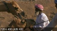 Дикая Аравия / Wild Arabia (2013) HDTV 720p + HDTVRip