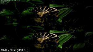 Такие важные насекомые 3D / Большие жуки 3D / Kleine Krabbler ganz groß 3D / Big Bugs 3D  (by Ash61) Вертикальная анаморфная стереопара