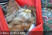 http://i47.fastpic.ru/thumb/2013/0513/68/e274f3c9f25b67cb43cb842a5294d468.jpeg