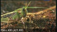 Школа выживания в мире насекомых / Unusual World (2008) SATRip