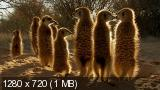 Африка / BBC: Africa [01-05 из 06] (2013) BDRip 720p от HDClub